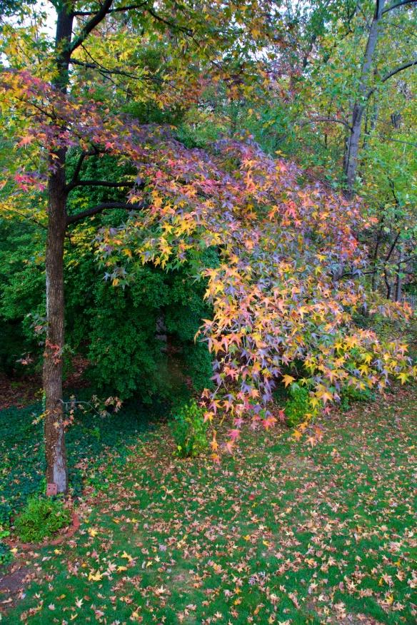 Fall in our backyard