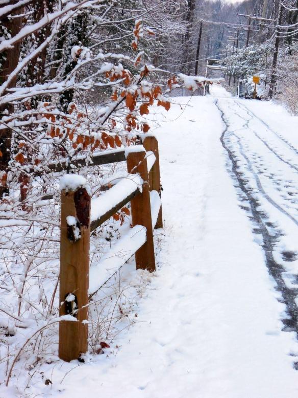 Snowy a Trail
