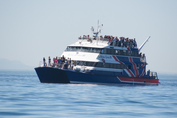 Ora whale watching boat